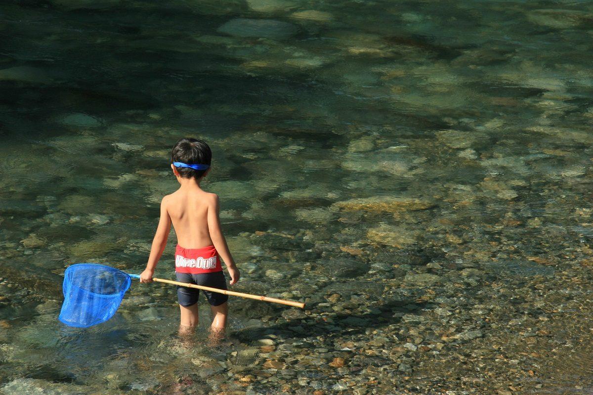 ガサガサで捕まえよう♪川にはどんな生き物たちが住んでいるの?
