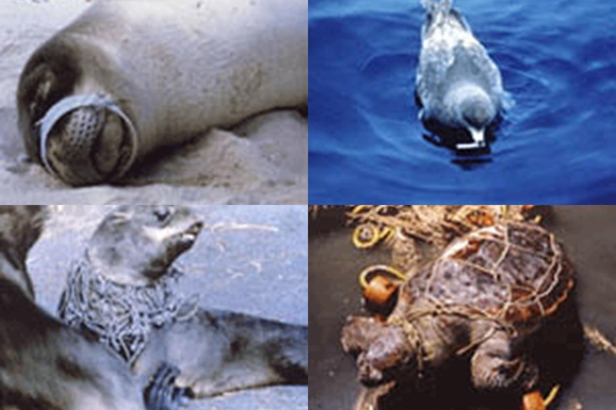 美しい自然が脅かされている海のゴミ問題解決に向けて ...