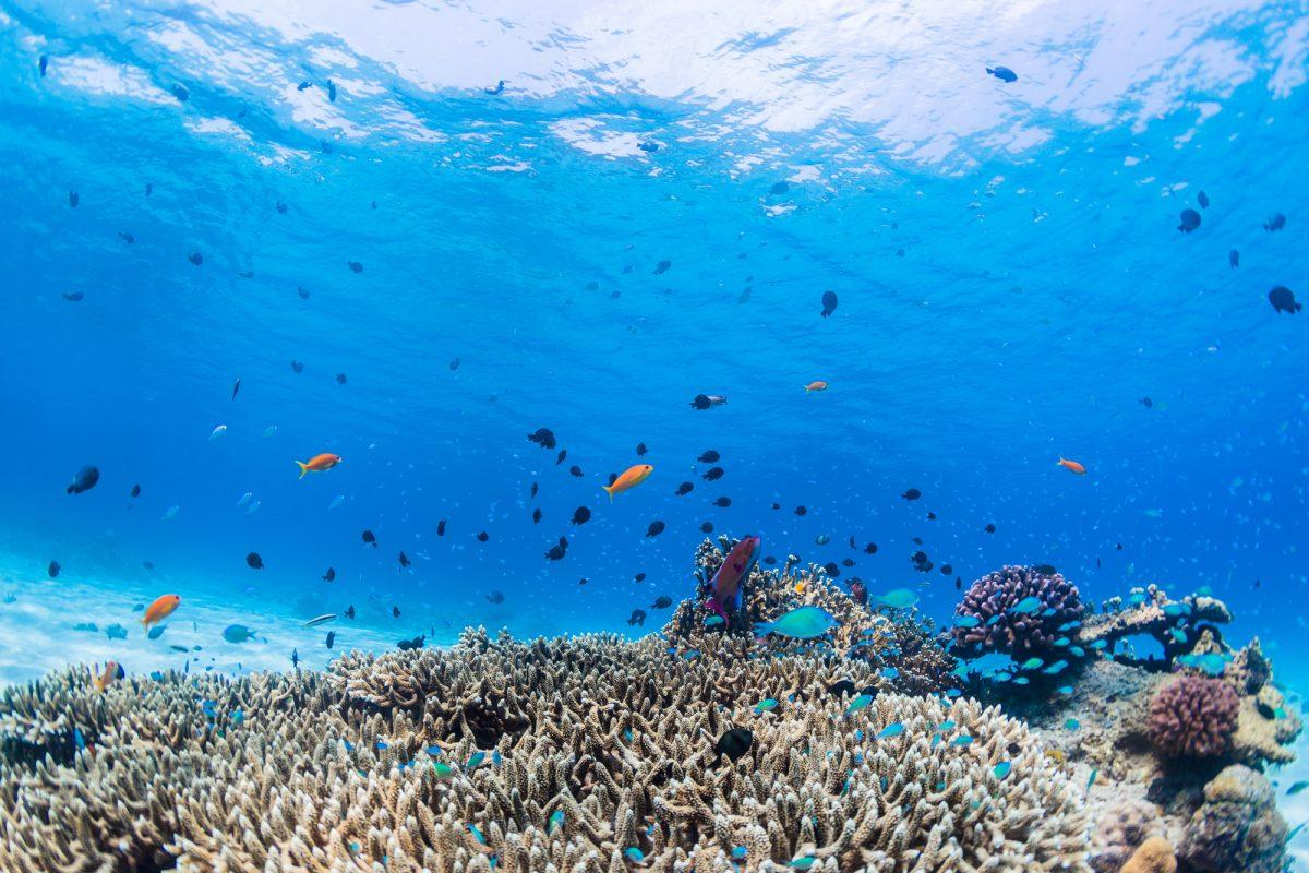 さかなクンがアンバサダー♪今年は国際サンゴ礁年?「チーム美らサンゴ」サンゴ植付けイベントをご紹介♪