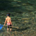 川にはどんな生き物たちが住んでるの?「ガサガサ」で探して自然を知ろう!