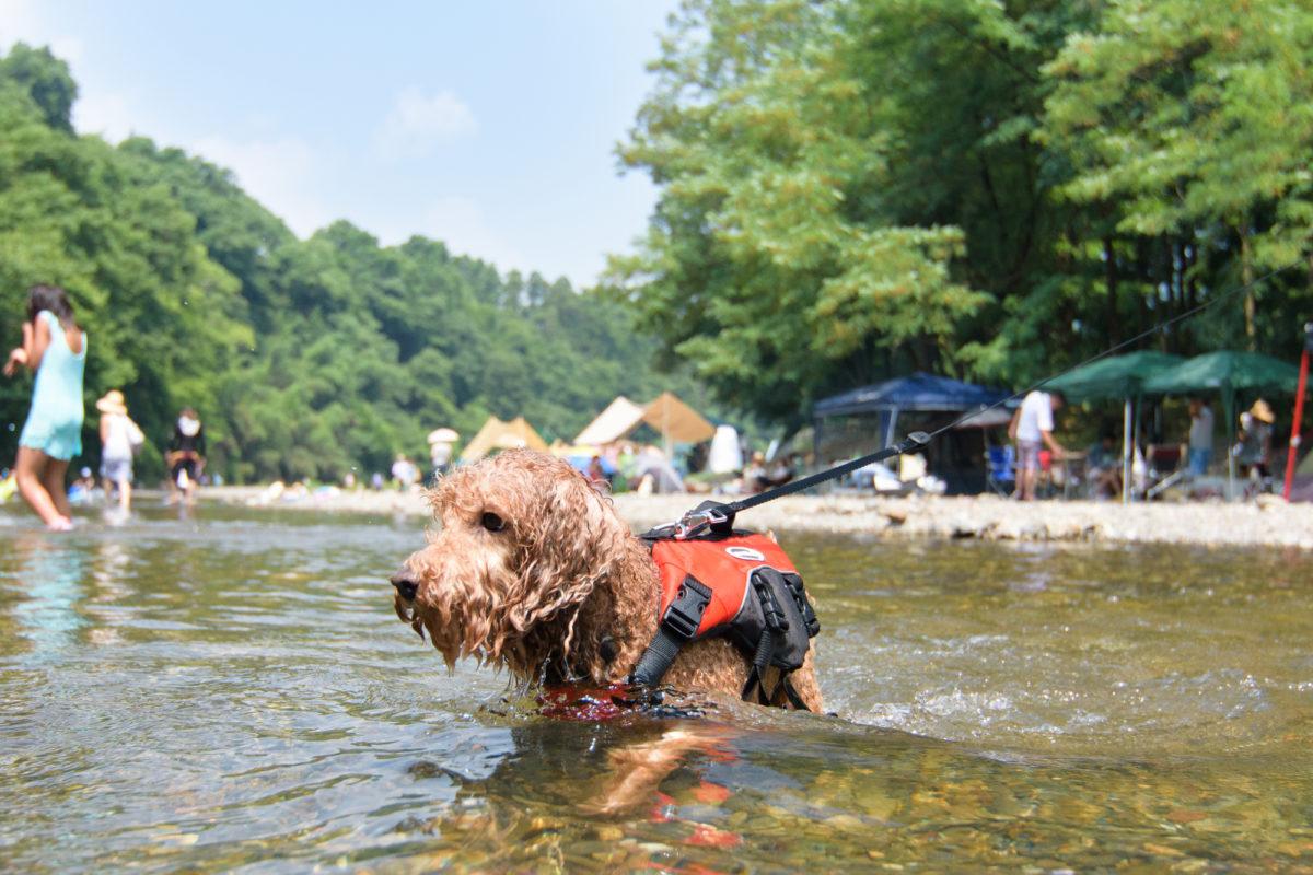 川遊び ルール