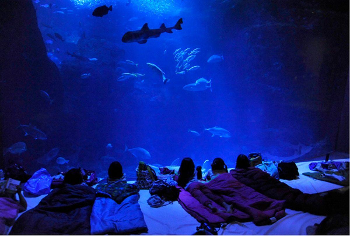 夏休み!親子で楽しむなら水族館にお泊りで楽しく学ぼう!