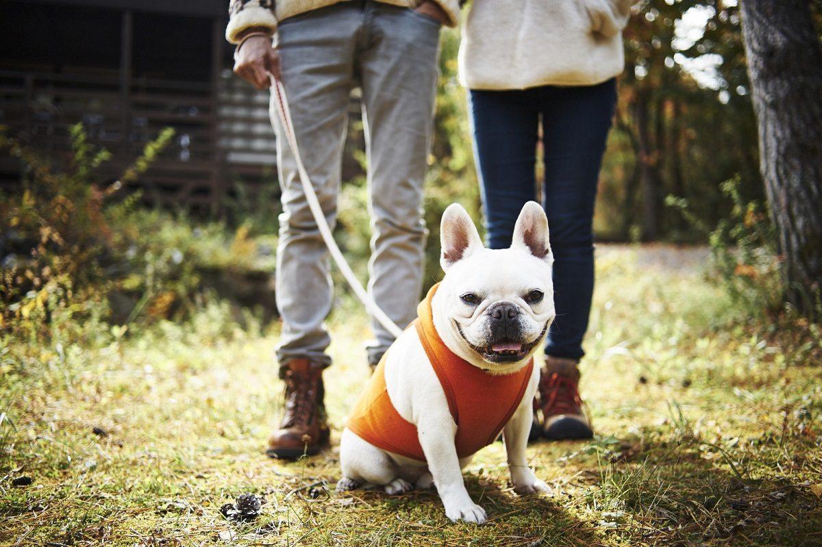 愛犬と一緒に自然を満喫♡ワンちゃん同伴にやさしいキャンプ場