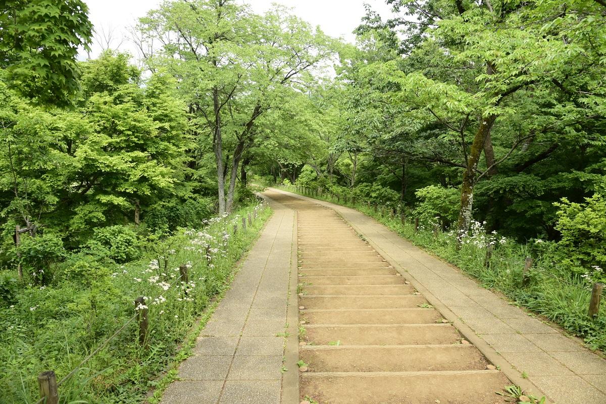 弘法山 トレイルランニングコース