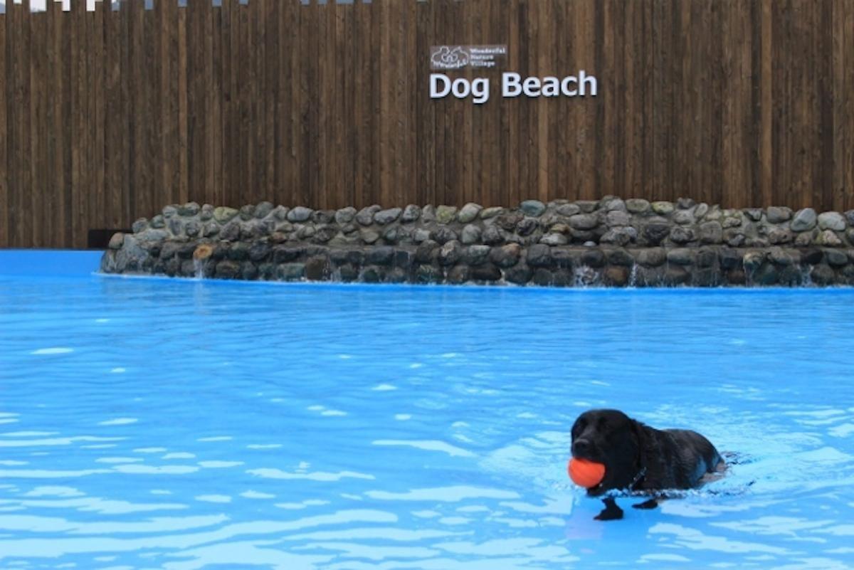 キャンプ場 ドッグラン 犬用温泉