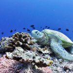 ウミガメ産卵地の保全から海と人間の共存を考えよう!