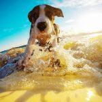 ドッグサーフィンから見える犬と人の関係性!