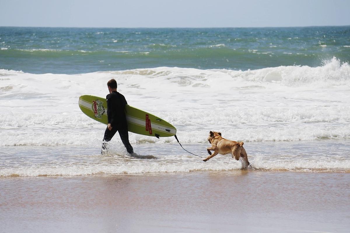 ドッグサーフィン トレーニング