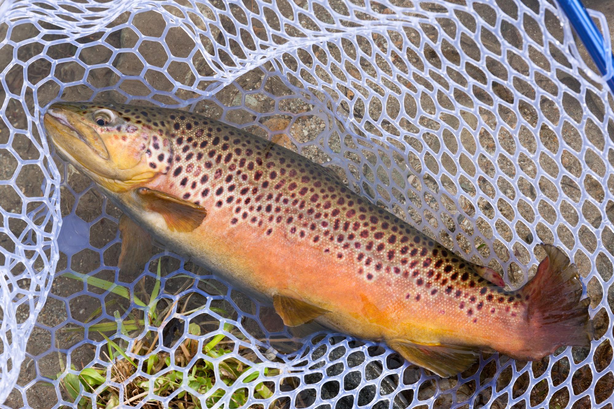 管理釣り場ルール&マナー