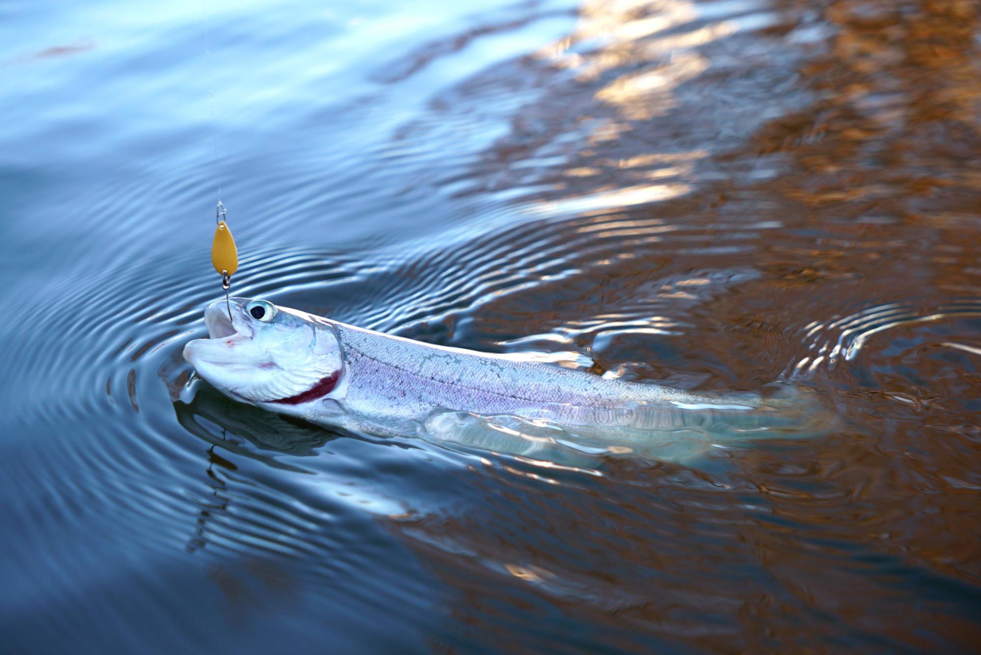 管理釣り場 システム