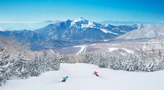 東北 スキー場