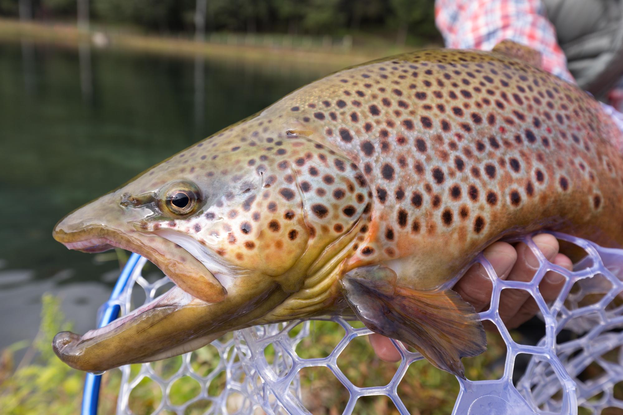 渓流&管理釣り場で釣れる魚