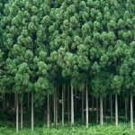 国土の7割が森林♪日本の森をよみがえらせる為に重要な「林業」のお仕事とは!?