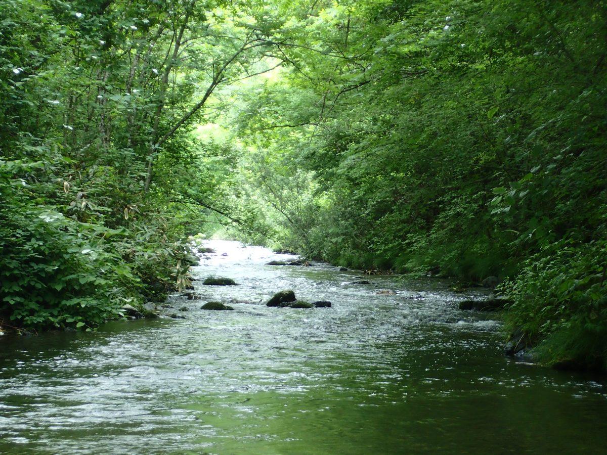 実は危険がいっぱい?!渓流釣りを安全に楽しむために絶対に忘れてはいけないこと