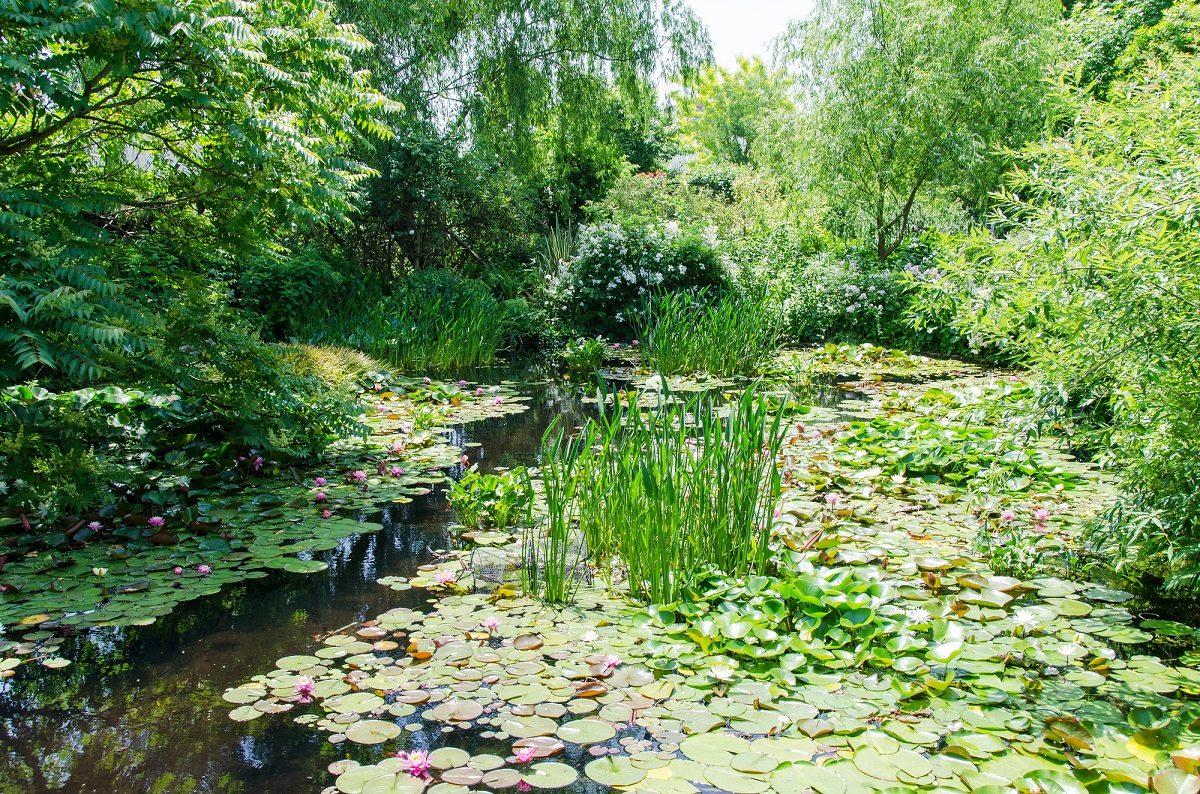 持続可能な生態系を守る「ビオトープ管理士」をご存知ですか?