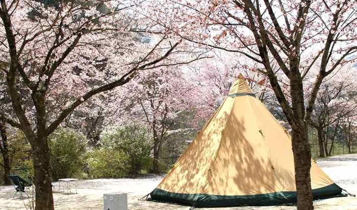 お花見キャンプ