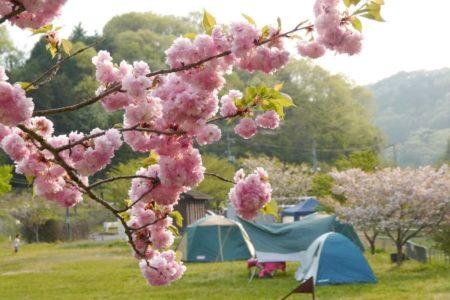 お花見キャンプ!自慢の桜をたっぷり味わえるおすすめキャンプ場〜関西編