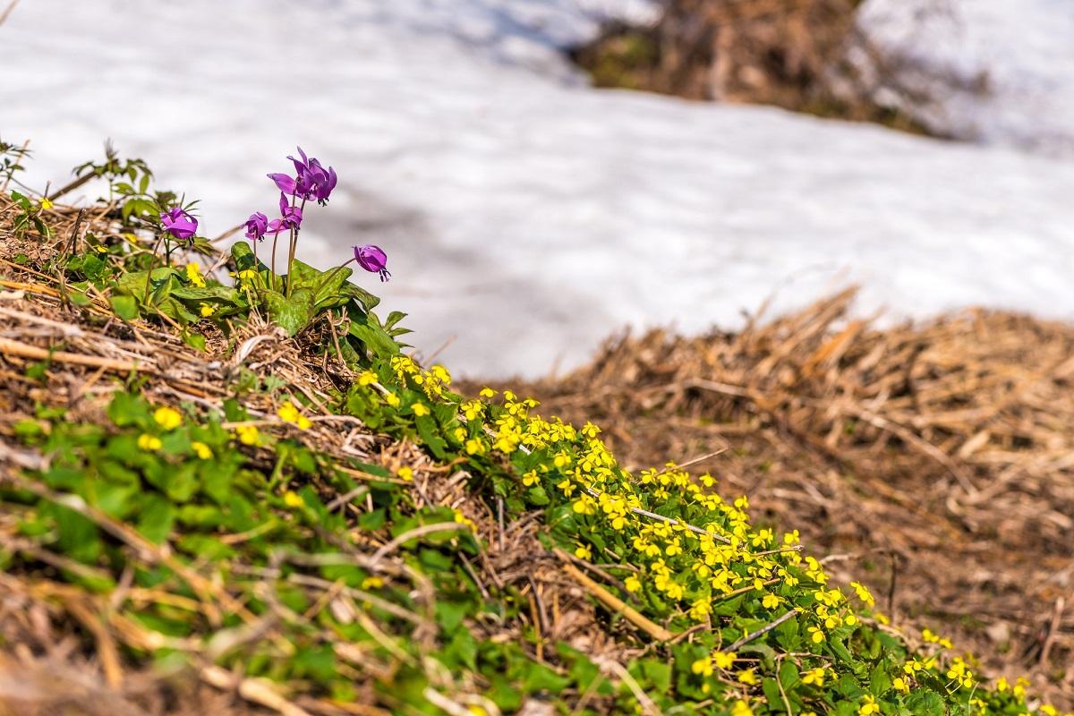 シーズンオフにはまだ早い!春スキーでも雪質が期待できるおすすめスキー場