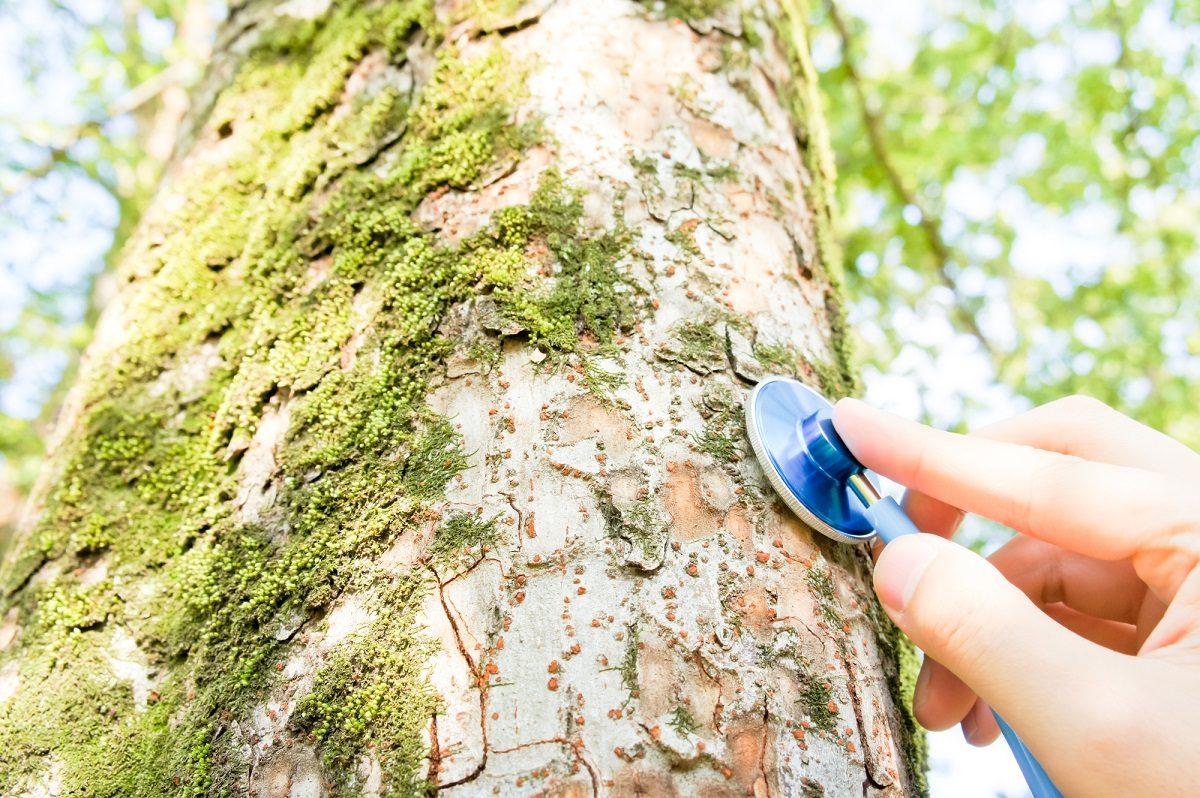 「樹木医」になるにはどうしたら良い?受験資格や試験内容などを調べました!