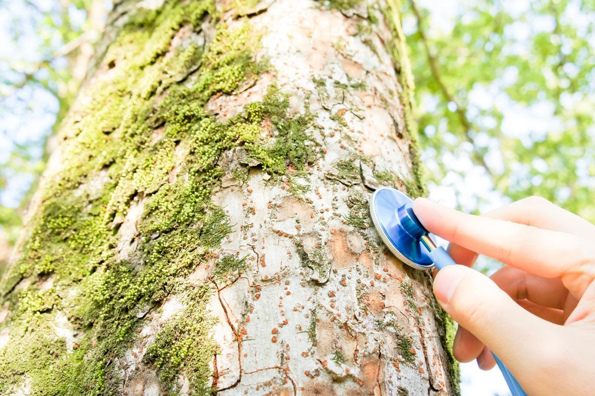 樹木医 仕事内容