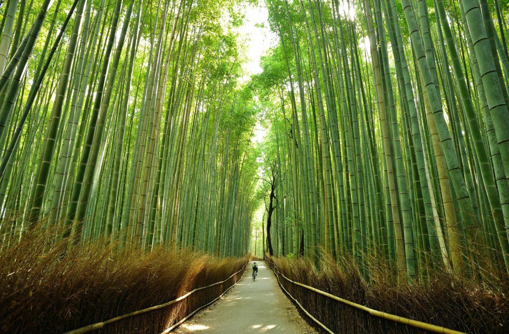 京都でおすすめのレンタサイクルショップ