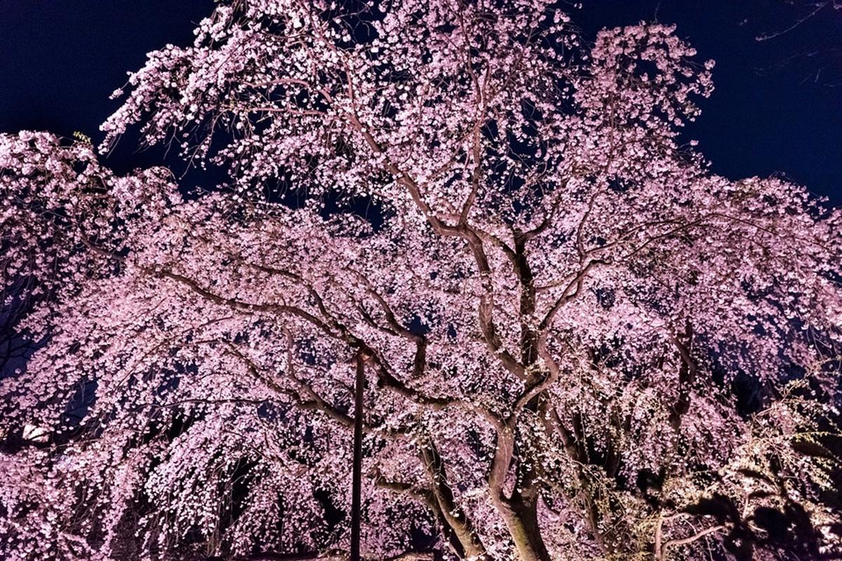 日本の自然アウトドア業界
