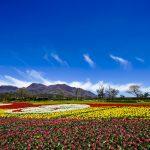 阿蘇市が取り組んでいる「緑花ボランティア・花いっぱい運動支援事業」について