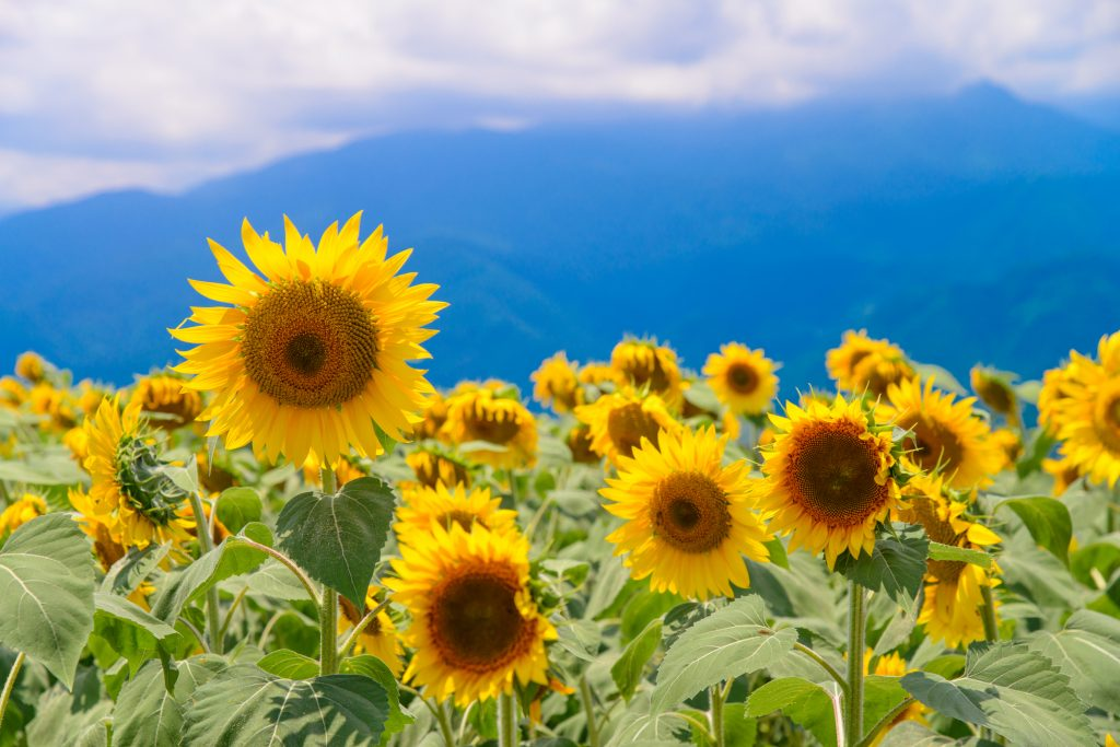 緑花ボランティア・花いっぱい運動支援事業