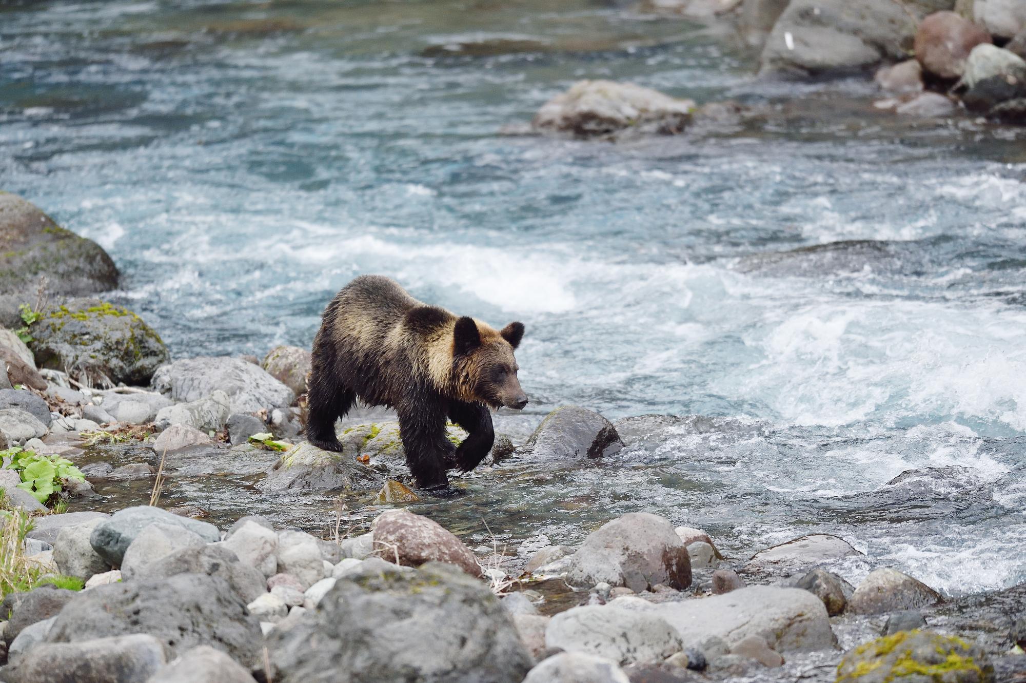 渓流釣りで熊