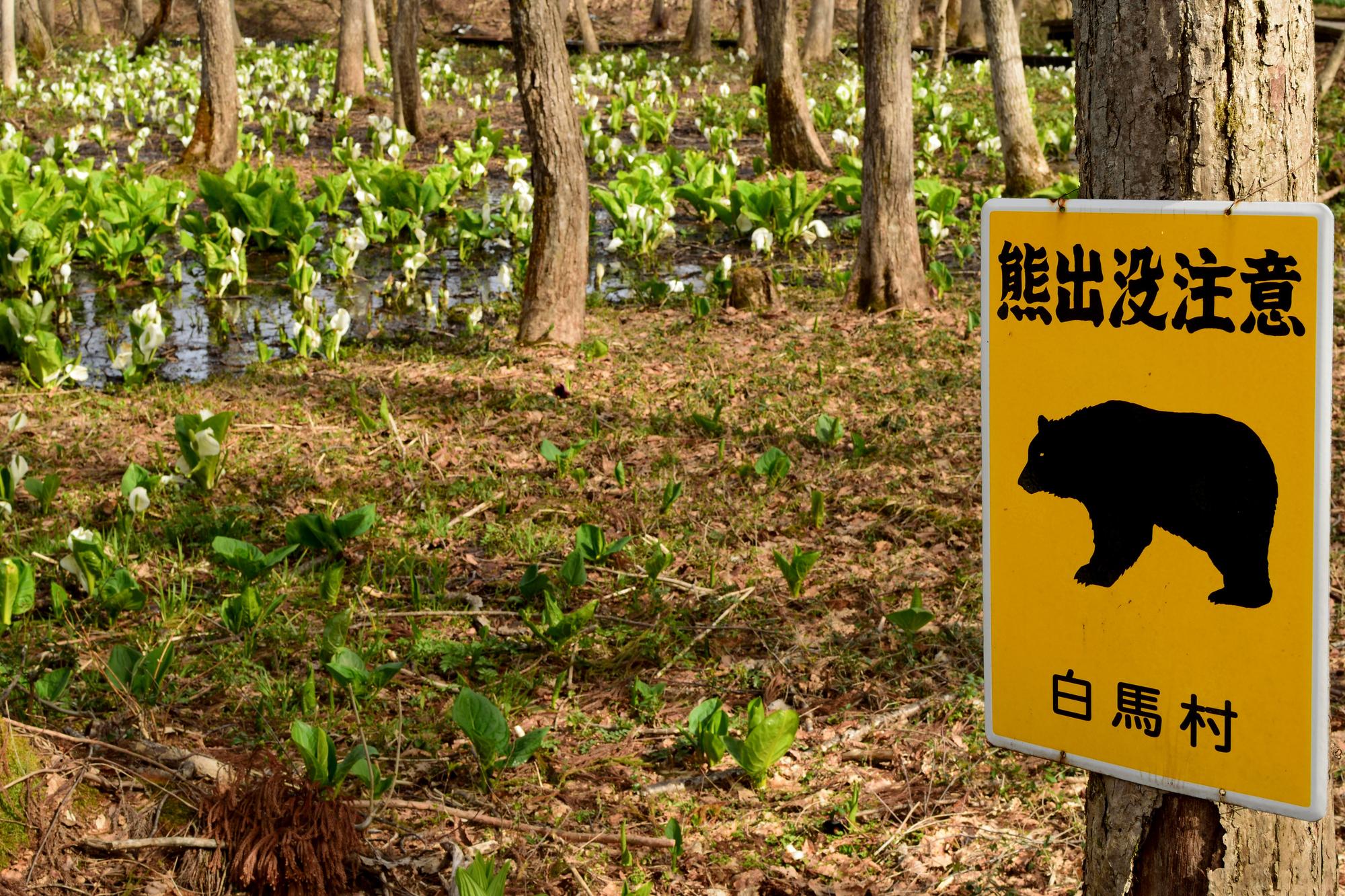 【熊注意】渓流釣りで熊に出遭わないようにするための心構え&熊対策グッズ