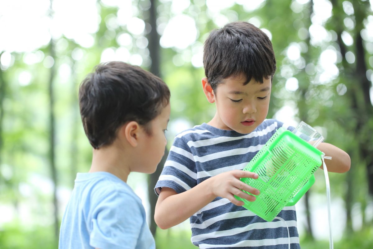 キャンプは自由研究のヒントがいっぱい!自然の中でできる自由研究のテーマ8選