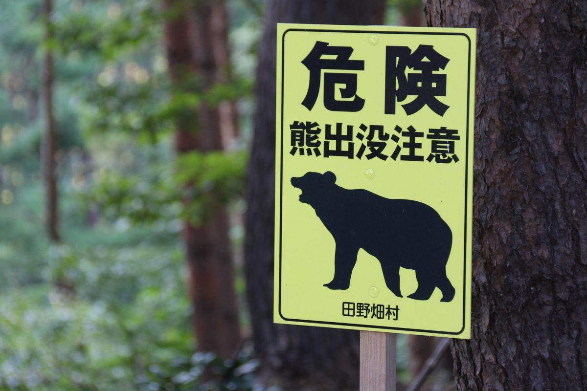 アウトドアで遭遇する危険生物とは?キャンプやハイキングにおける要注意動物対処法