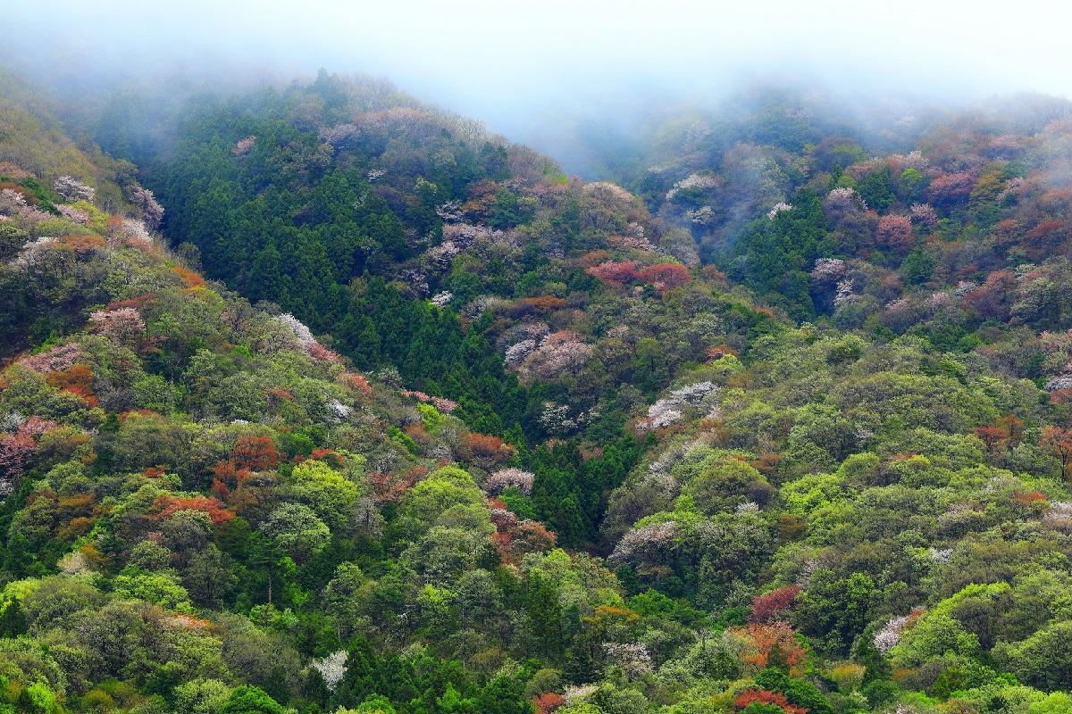 桜川市高峰山全国のファットバイクフィールド