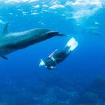 野生のイルカと泳げる御蔵島に行こう!ドルフィンスイムのコツと練習方法