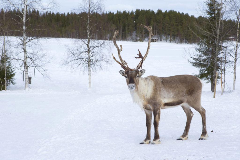 フィンランドの交通ルールとガイド付きツアー