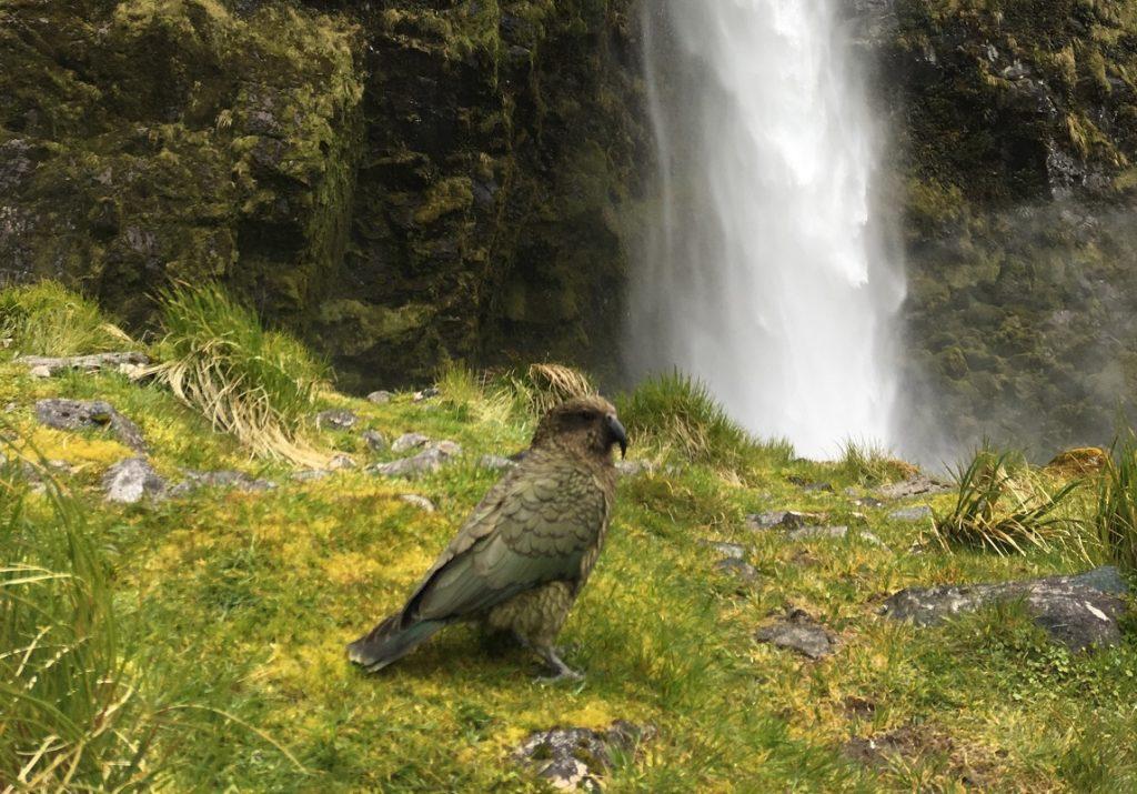 ニュージーランドでトレッキングや登山