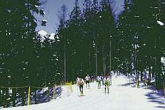 クロスカントリースキーおすすめコース