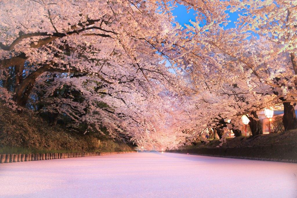 弘前最大のまつり『弘前さくらまつり』が4月20日から開催