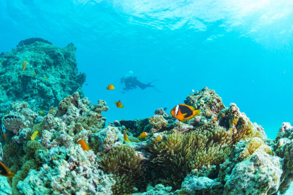 カクレクマノミ糸満エリアの人気ダイビング