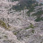 【2020年関西編】春登山は花がきれいな山へ行こう!初心者向け春登山