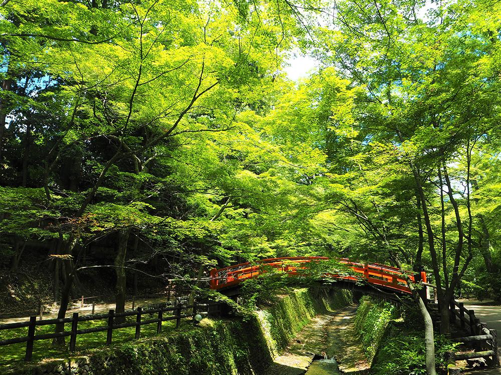 新緑の季節は京都の「青もみじ」をスカイバスツアーで満喫! 京都ブライトンホテルで5月に『青もみじプラン』を開催