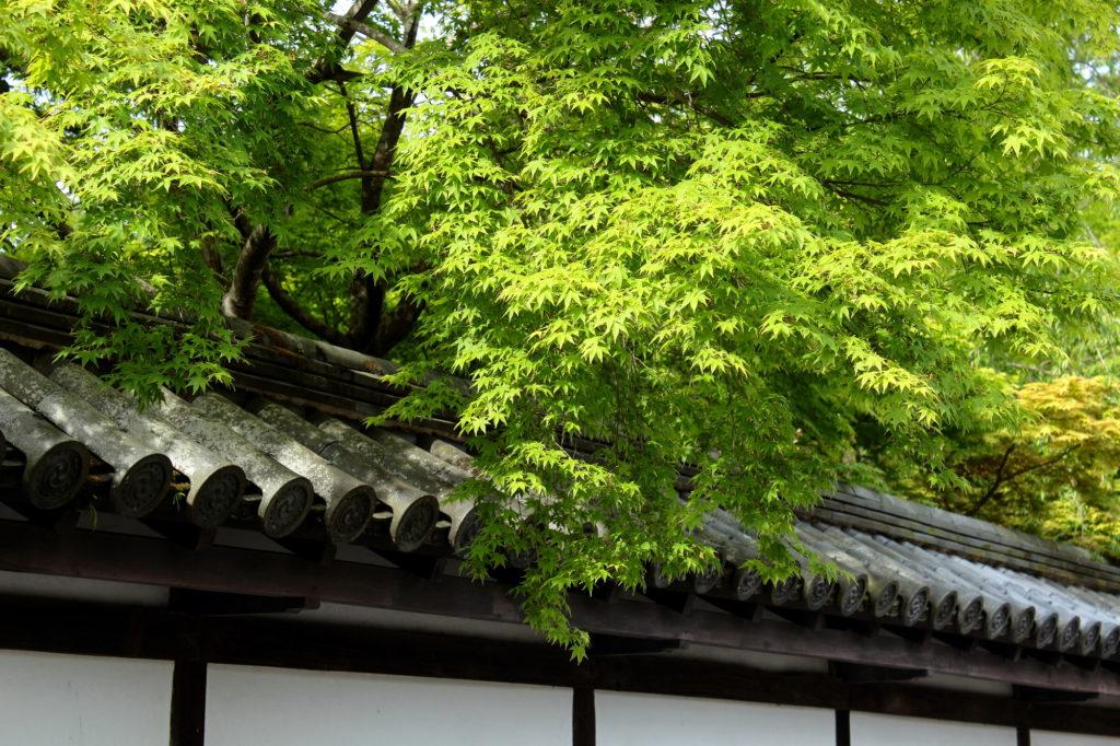 京都ブライトンホテルの「青もみじ」