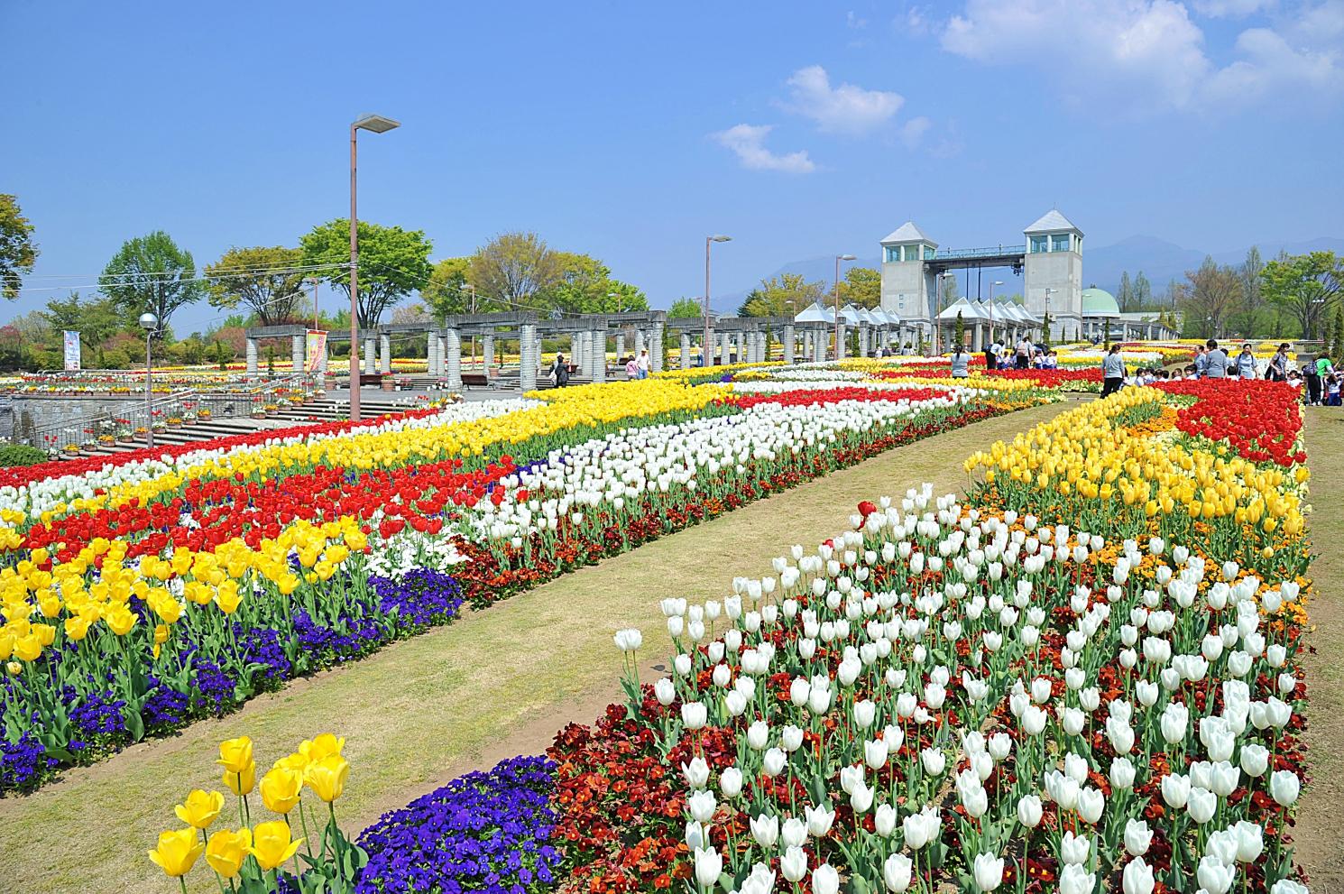 70品種20万球のチューリップが見頃! 笑顔が咲く ぐんまフラワーパーク、春フェスタ4/6~4/29開催