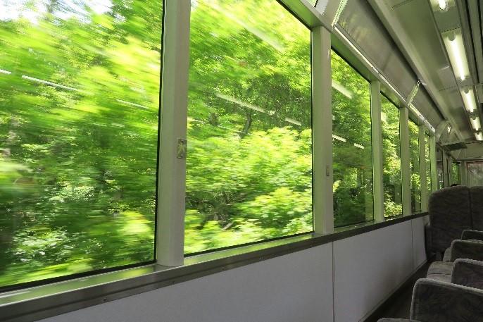 山の景色ともみじのトンネルを抜けて清涼感たっぷりの洛北へ 「青もみじ新緑の徐行運転」を実施
