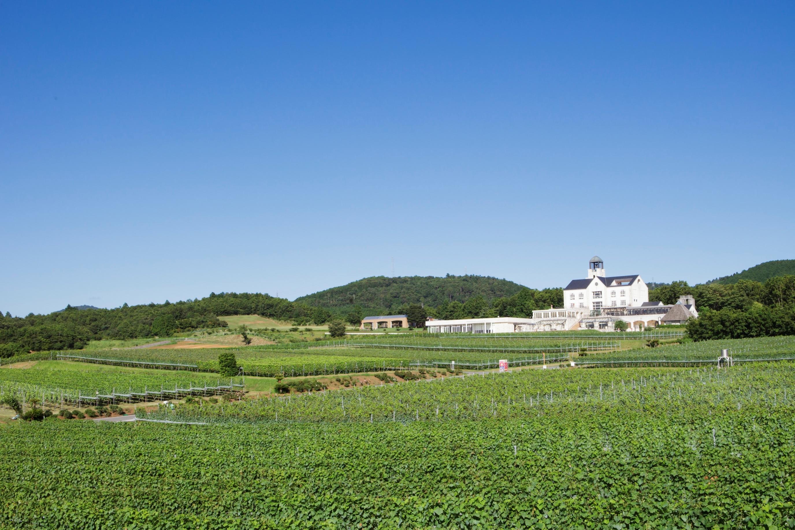 静岡県伊豆市にて中伊豆ワイナリーのGWイベント 「Go! Go! Winery 2019」4/27~5/6開催