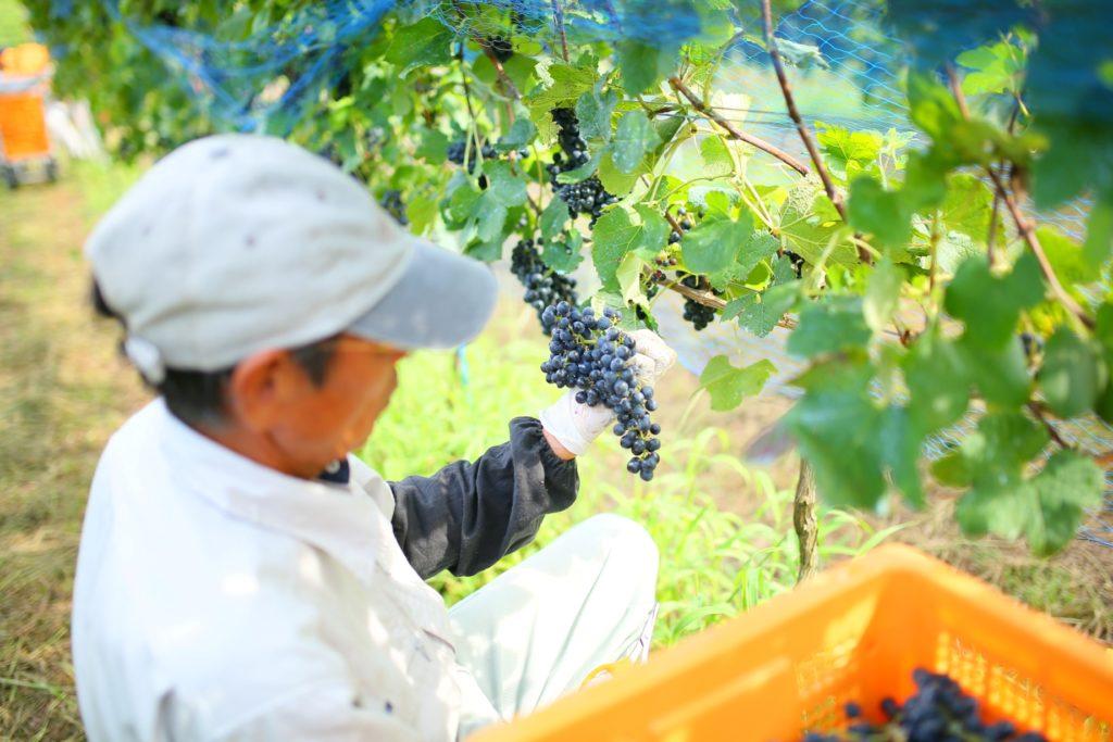 静岡県伊豆市にて「Go! Go! Winery 2019