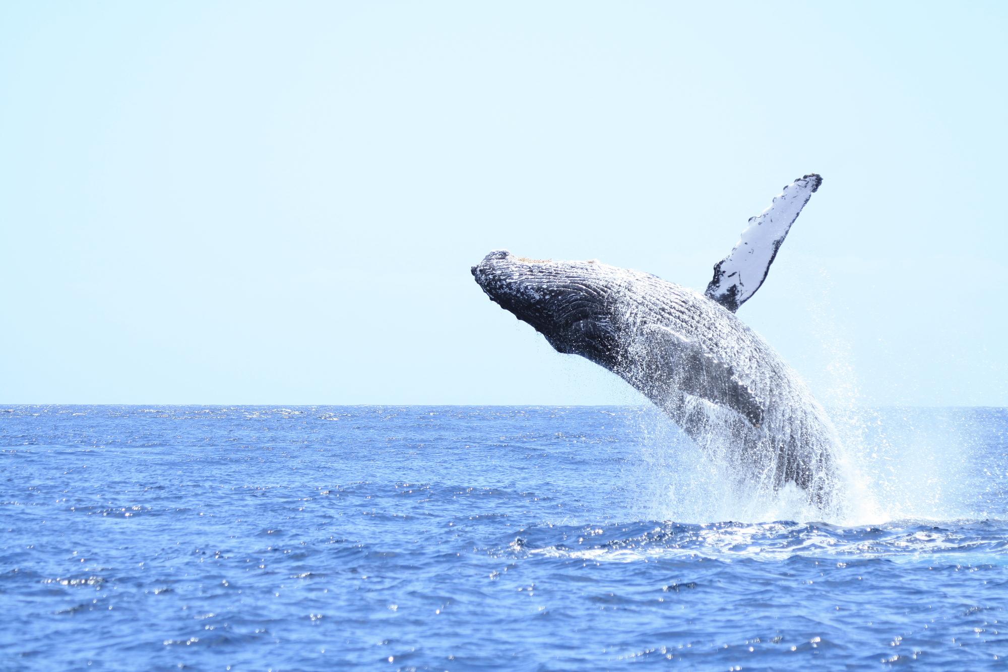 一生に一度は行きたい小笠原諸島!東京都最南端にある世界自然遺産の島々