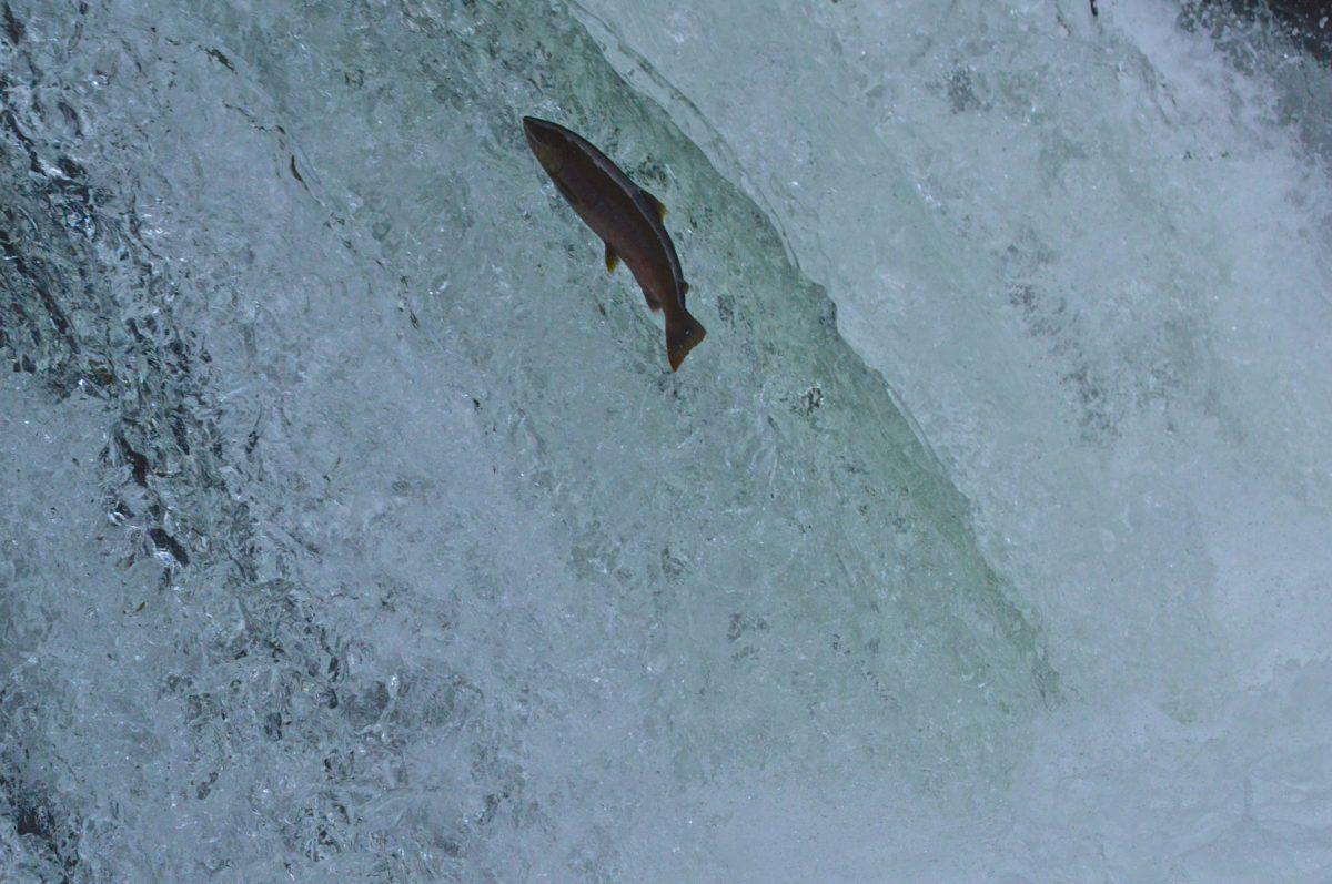 渓流 トップ 渓流釣りで気圧を知る