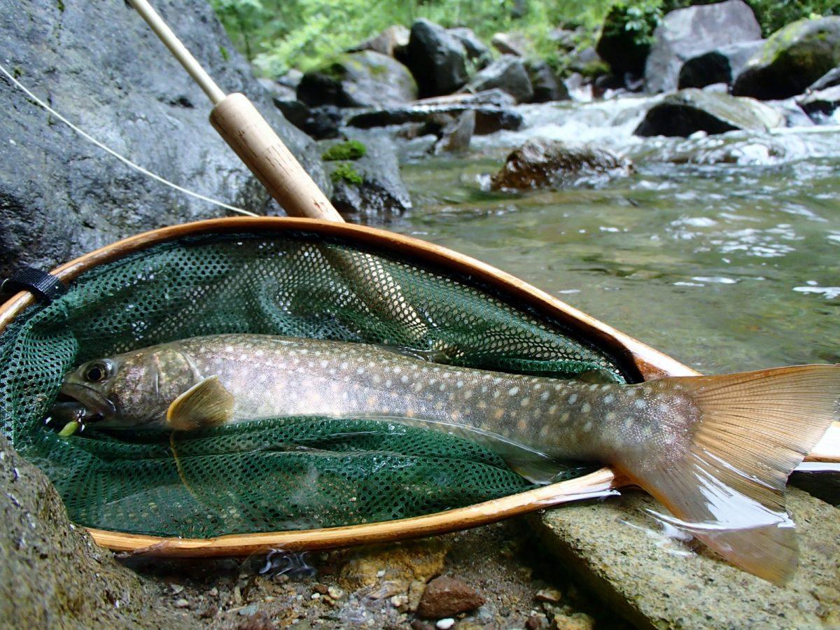 たも網 渓流 渓流釣り道具・アイテム