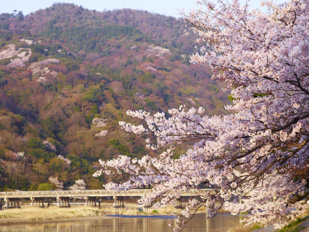 星のや京都 嵐山の隠れた魅力に出会う「野遊び植樹会」